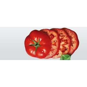 Kuchyňský nůž na rajčata VICTORINOX plast
